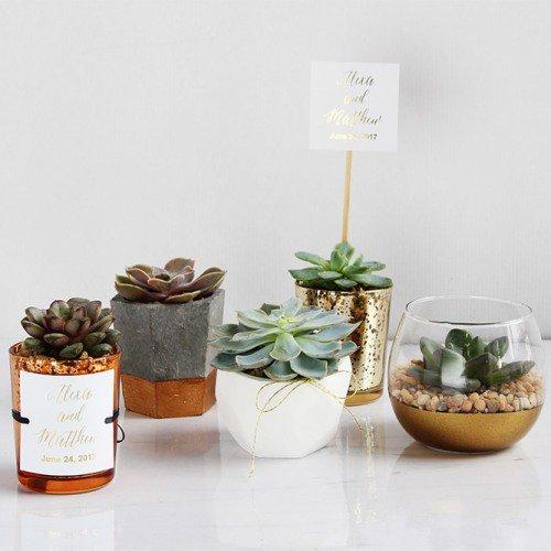 Live Succulent Favors
