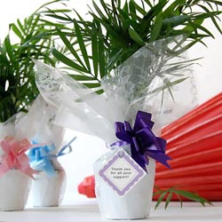 Mini Palm Tree Favors