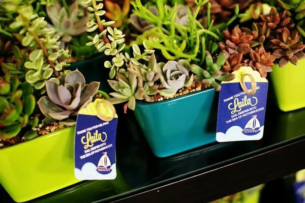 picture of succulent plant baby shower favors