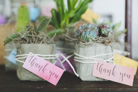 picture of popular succulent favors